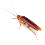 Most Effective Roach Spray