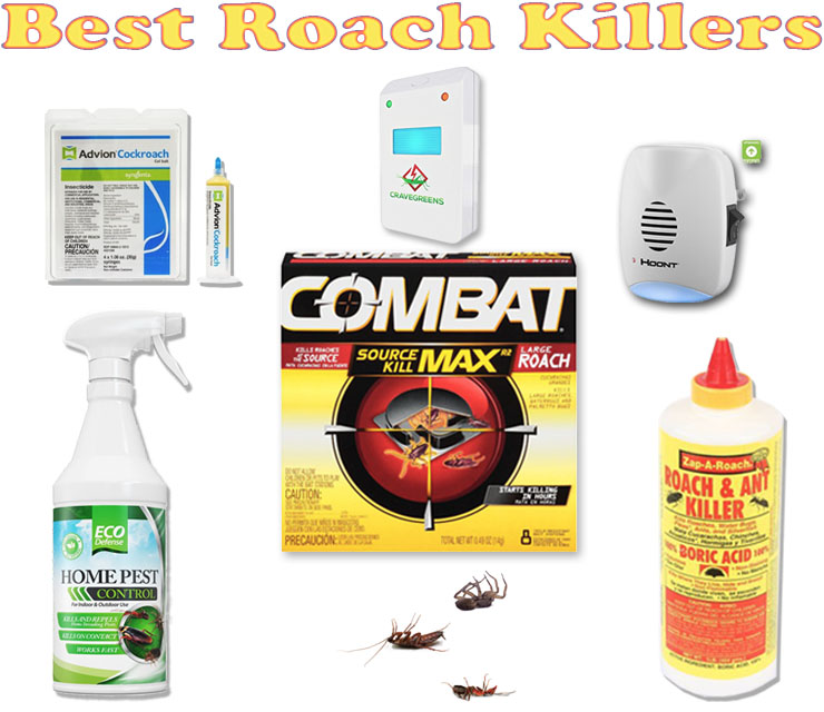 Dealing With Cockroaches Solution Is Using Roach Killer